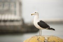 Vogel, der heraus über Hafen schaut Stockfoto