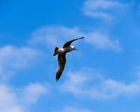 Vogel, der hoch fliegt Lizenzfreie Stockfotos