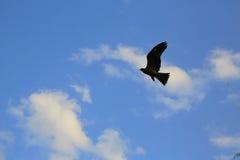 Vogel, der im blauen Himmel, passend für ansteigt auf Lizenzfreie Stockfotos