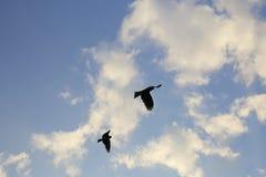 Vogel, der im blauen Himmel, passend für ansteigt auf Stockfoto