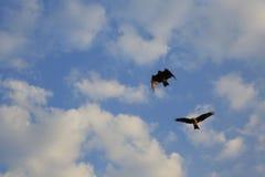 Vogel, der im blauen Himmel, passend für ansteigt auf Lizenzfreies Stockfoto