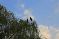 Vogel, der im blauen Himmel, passend für ansteigt auf Stockfotos