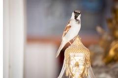 Vogel in der Stadt Stockbilder