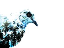 Vogel der Tropen Lizenzfreie Stockfotografie