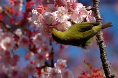 Vogel, der von einer Blume saugt Stockfotografie