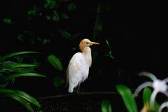Vogel, der zurück schaut Stockfotografie