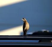 Vogel, der zur Kamera schaut Lizenzfreies Stockbild