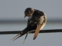 Vogel des Betrachtens der rebellischen Stadt Stockbild