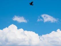 Vogel des gelb-braunen Adlers, der hohes Schattenbild im blauen Himmel mit whi fliegt Stockbild