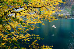 Vogel des Herbstes Stockfotos