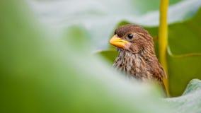 Vogel dicht omhoog dierlijk Zuid-Afrika royalty-vrije stock fotografie