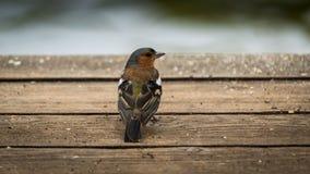 Vogel dichtbij de vijver stock foto