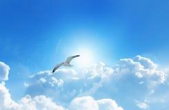 Vogel die boven wolken vliegt stock afbeeldingen