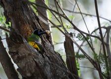 Vogel die in Cancun eten stock foto