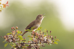 Vogel die in het bos tonen royalty-vrije stock fotografie