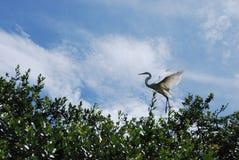 Vogel die het nest verlaten stock afbeelding
