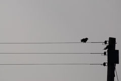 Vogel die net op een sihouette van de telefoondraad onder ogen zien Stock Afbeelding