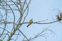 Vogel die op een boom rusten stock afbeeldingen