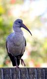 Vogel die op een Muur wordt neergestreken stock afbeelding