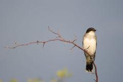 Vogel die op een Tak wordt neergestreken stock foto