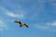 Vogel die op hemel bij zonsondergang glijden Stock Afbeelding