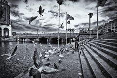 Vogel die op het dok stijgen Stock Afbeeldingen
