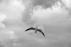 Vogel die op wolk en hemel glijden Stock Afbeeldingen