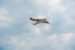 Vogel die op wolk en hemel glijden Royalty-vrije Stock Afbeelding