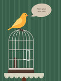 Vogel die op zijn kooi wordt neergestreken Royalty-vrije Stock Afbeelding