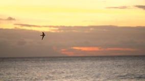 Vogel die over de oceaan bij zonsondergang vliegen stock footage