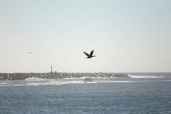 Vogel die over de rotsachtige kustlijn vliegen stock afbeelding