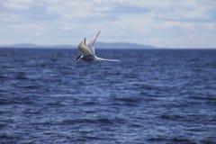 Vogel die over het overzees vliegen Royalty-vrije Stock Foto