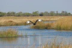 Vogel die over water vliegen Stock Fotografie