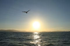 Vogel die over Zonsondergang in Hemel vliegen Stock Fotografie