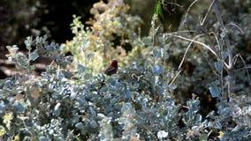 Vogel die rond een struik vliegen stock footage