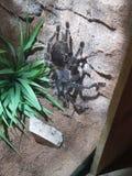 Vogel die spin eet stock fotografie