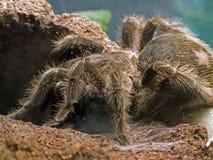Vogel die spin eet royalty-vrije stock afbeeldingen