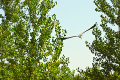 Vogel die tussen bomen vliegen Stock Foto's