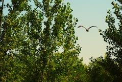Vogel die tussen bomen vliegen royalty-vrije stock afbeelding