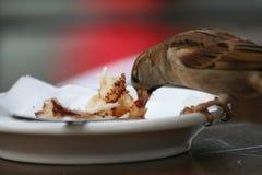 Vogel die van een plaat eet royalty-vrije stock fotografie
