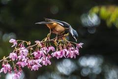 Vogel die zich aan een Bloem vastklampen Royalty-vrije Stock Foto's