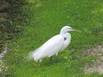 Vogel die zich bij waterenrand bevinden Royalty-vrije Stock Afbeelding