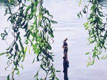 Vogel die zich op een houten stok bevinden Stock Afbeelding