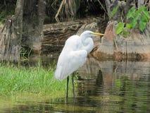 Vogel die zich in water bevinden Stock Foto