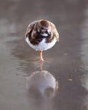 Vogel die zich in zand bevinden Stock Fotografie