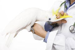 Vogel dierenarts Stock Fotografie
