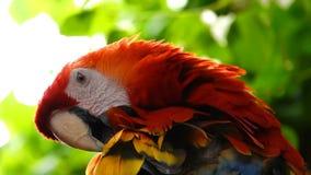 Vogel Dierlijke Papegaai en mooie vogel stock videobeelden