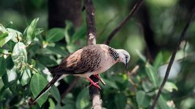 Vogel (Duif, Duif of het Ondubbelzinnig maken) in een aard stock foto's