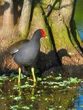 Vogel durch Baum in den Sumpfgebieten Stockbilder