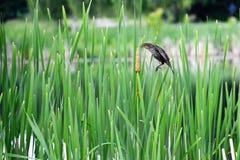Vogel durch das Gras Lizenzfreies Stockbild